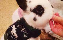 2016/10/cute-animals-wearing-tiny-sweaters-79-5804cecfbbde8__605.jpg
