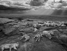 Wystawa: Wildlife Photographer of the Year