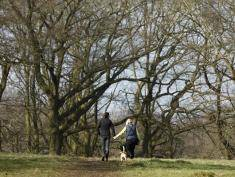 A couple walk their dog through Hampstead Heath in North London on February 17, 2013, after the British captal awoke to unseasonably warm weather.   AFP PHOTO / JUSTIN TALLIS        (Photo credit should read JUSTIN TALLIS/AFP/Getty Images)