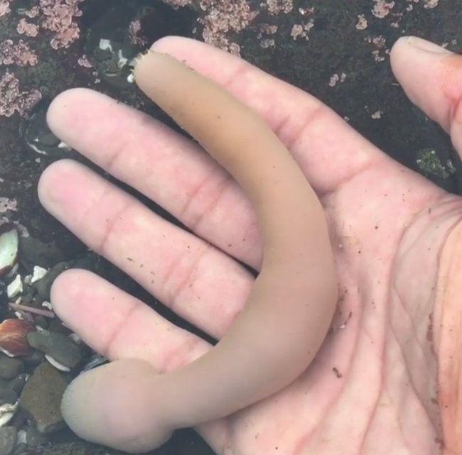 Czarny grube sex tube